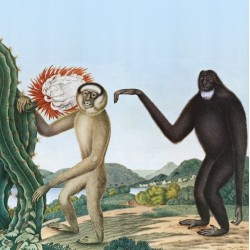 Baston - Primates - LP Vinyl Album - Krautrock Coldwave